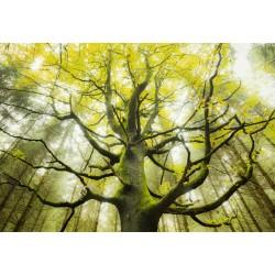 ΠΑΖΛ 1000 ΚΟΜΜΑΤΙΑ - DREAM TREE